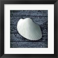 Framed Seashore Shells Navy I