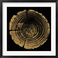 Framed Tree Trunk II