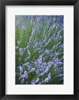 Framed Purple Wildflowers