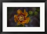 Framed Close Up of Orange Flower