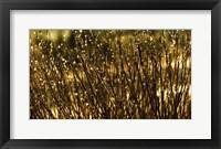Framed Glistening