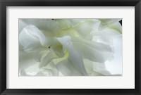 Framed Close Up of White Flower