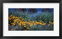 Framed Field of Orange Flowers