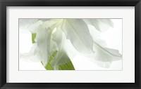 Framed White Petals