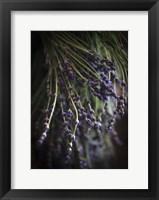 Framed Purple Buds