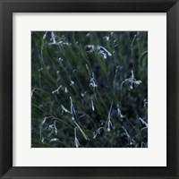 Framed Tendrils