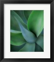 Framed Green Floral