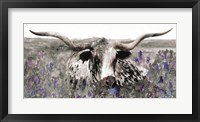 Framed Longhorn in Flower Field