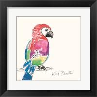 Framed Preston the Parrot
