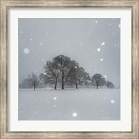 Framed Trees in Snow