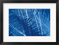 Framed Cyanotype Tropical XI