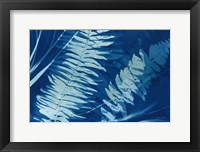Framed Cyanotype Tropical X
