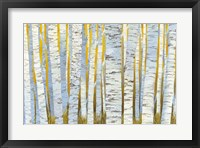 Framed Aspen Grove