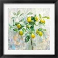 Framed Lemon Branch