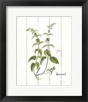 Framed Cottage Herbs IV