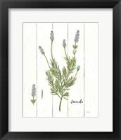 Framed Cottage Herbs II