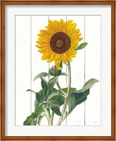 Framed Cottage Sunflower