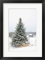 Framed Perfect Pine Tree