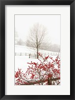 Framed Red on White