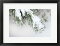 Framed Snowy Bough