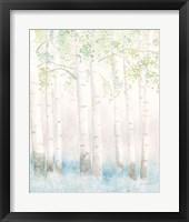 Framed Soft Birches III