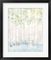 Framed Soft Birches II
