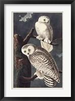 Framed Pl 121 Snowy Owl
