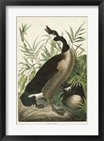 Framed Pl 201 Canada Goose