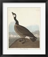 Framed Pl 277 Hutchinss Barnacle Goose