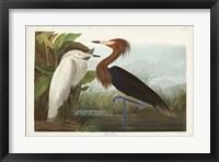 Framed Pl 256 Purple Heron
