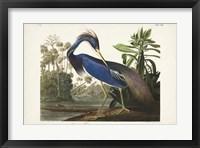 Framed Pl 217 Louisiana Heron