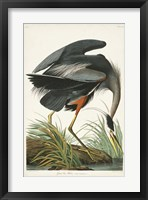 Framed Pl 211 Great Blue Heron