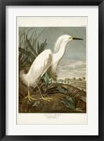 Framed Pl 242 Snowy Heron