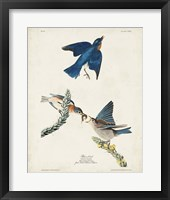 Framed Pl 113 Blue Bird