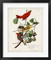 Framed Pl 44 Summer Red Bird