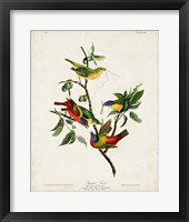Framed Pl 53 Painted Finch