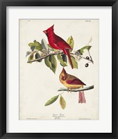 Framed Pl 158 Cardinal Grosbeak
