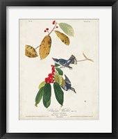 Framed Pl 48 Cerulean Warbler