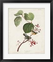 Framed Pl 148 Pine Swamp Warbler