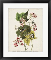 Framed Pl 123 Black & Yellow Warbler