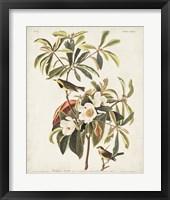 Framed Pl 185 Bachman's Warbler
