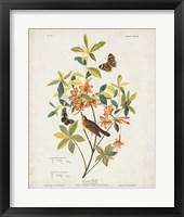 Framed Pl 198 Swainson's Warbler