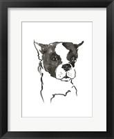 Framed Dog V