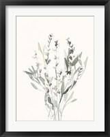 Framed Delicate Sage Botanical V