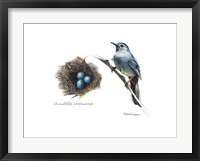 Framed Bird & Nest Study II