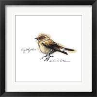 Framed Songbird Study I