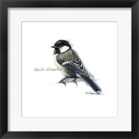 Framed Songbird Study II