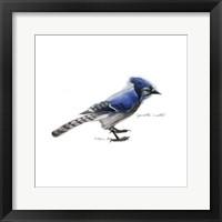 Framed Songbird Study III