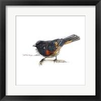 Framed Songbird Study IV