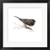 Framed Songbird Study V